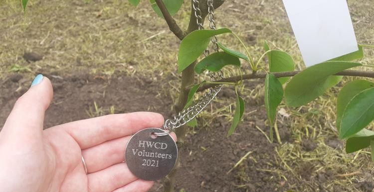 Volunteer tag on tree